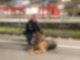 Ausgesetzter Hund KN