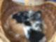 Küken und Katzenbabys