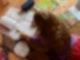 Ein Mädchen liegt auf einem Teppich in seinem Kinderzimmer und erledigt seine Hausaufgaben im Fach Deutsch. Foto: Jens Kalaene/dpa-Zentralbild/dpa