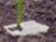 Pflanze-Erde_231990823_L Cropped(1).jpg